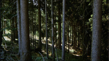 Das liebestolle Internat Wald 7