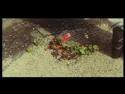 Keine Angst. Die Blume kommt nachher in einen schönen Blumentopf.